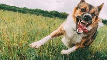 dog bites attorney orange county